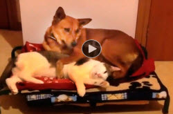 Funny-video-of-cats-stealing-dog's-beds,-funny-video-for-kids