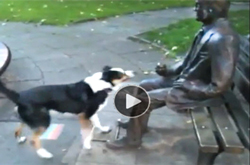 Funny-video-of-dog-trying-to-get-a-statue-to-play-fetch-the-stick