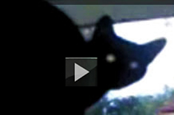 Video of cat barking like dog