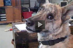 Funny Animal Videos-Ultimate Dog Tease, great talking dog