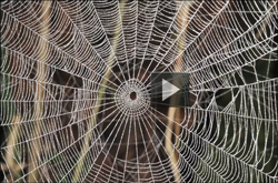 Video shows why spiders don't stick to their web