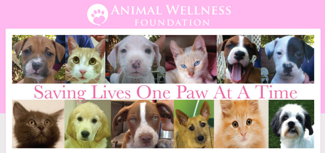 Los-Angeles-animal-rescue-group-showing-pets-ready-for-adoption-at-Animal-Wellness-Foundation-in-LA