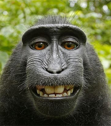 Monkey-self-portrait