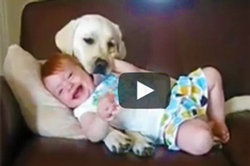 Video-of-babies-laughing-at-dogs,-funny-video