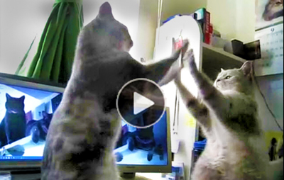 Funny-cat-video-of-cats-playing-patty-cake,-talking-and--humorous-arguing