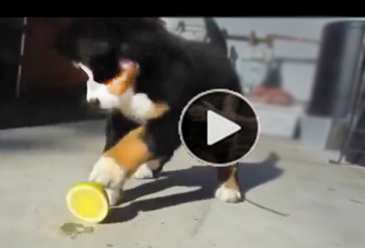 Funny-dog-video-of-silly-puppies-nutty-reactions-to-their-first-fruit-encounter