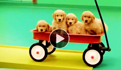 Funny-video-of-Rube-Goldberg-machine-made-with-dogs-&-toys