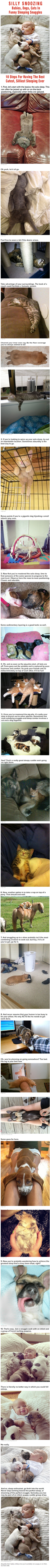 10 Steps For Achieving The Best, Cutest, Silliest Sleeping Ever - Babies,-Dogs,-Cats-sleeping-together - very funny photo essay