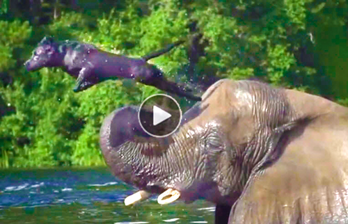 Funny-and-touching-video-of-best-friends,-an-elephant-&-dog,-playing-&-having-fun-in-a-river