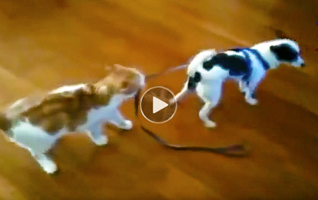 Funny Dog & Cat Video | cats annoying dogs compilation