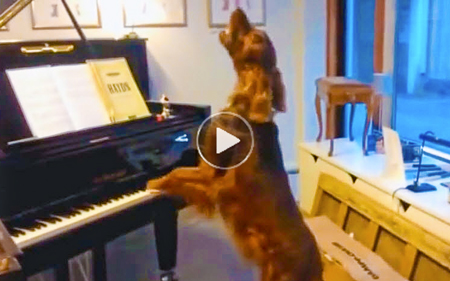 Funny Dog Video | dog plays piano and sings