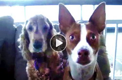 Funny Dog Video | what's the magic word that freezes these nutty mutts?