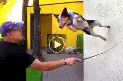 Funny Dog Video | Jumpy - amazing, crazy, leaping, flying dog
