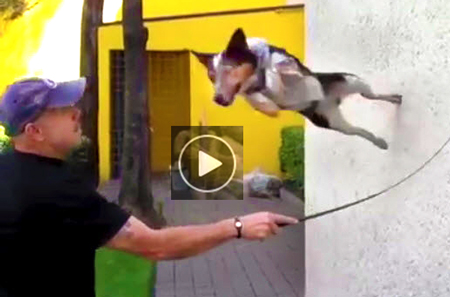 funny-dog-video-of-crazy-canine-Jumpy-doing-amazing-stunts-and-humorous-tricks
