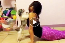 Funny-dog-and-cat-video-clip-shows-people-practicing-yoga-and-the-humorous,-annoying-things-their-cats,-dogs-do,-youtube - T