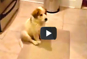 Funny-youtube-video-of-puppy-learning-how-to-catch is great video clip for kids