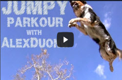 Funny youtube dog video with extreme stunt dog Jumpy, parkour athlete Alex Duong, T