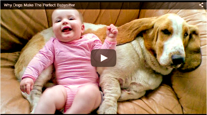 Funny youtube dog video showing puppies babysitting their family's children in a very humorous way