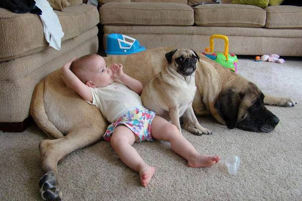 Photography of babies thriving and having fun with their pets - 5