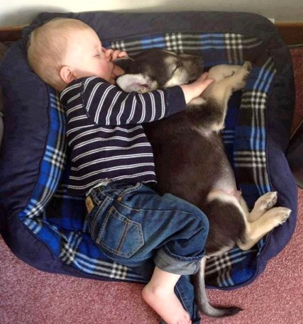Photography of babies thriving and having fun with their pets - 7