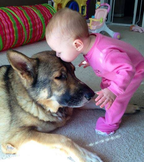 Photography of babies thriving and having fun with their pets - 8