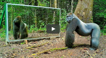 Funny animal video showing reactions of jungle creatures seeing their mirror reflections for the first time