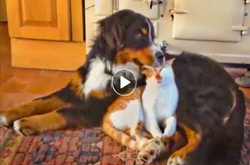 Funny Dog & Cat Video | canines many attempts to be feline's friend