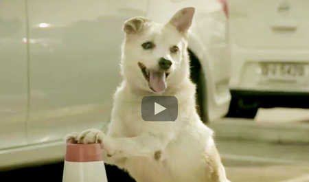 Funny Dog Video | good samaritan dog surprises new friend