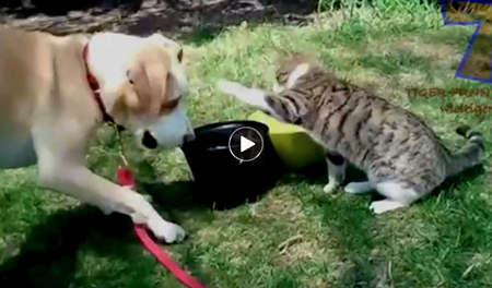 Funny Dog & Cat Video | cats annoying dogs
