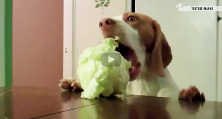 This is the best funny youtube video of dogs trying to steal food off tables