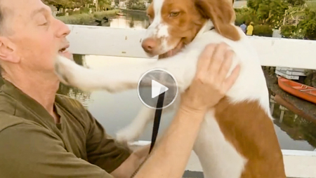 A goofy dog having fun running around famous Venice Canals in funny youtube clip for kids