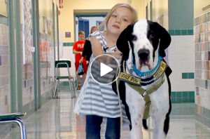 Dog Video | Great Dane helps child learn to walk again