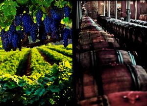 Double---vineyard-----wine-cellar.jpg